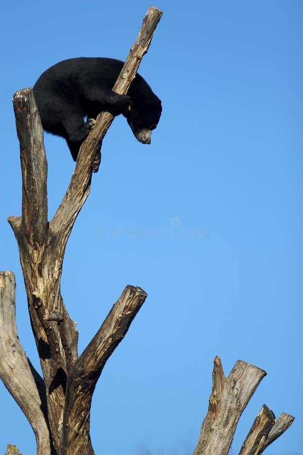 Il nero riguarda la parte superiore di un albero fotografia stock