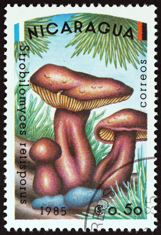 IL NICARAGUA - CIRCA 1985: Un bollo stampato nel Nicaragua mostra il retisporus dello Strobilomyces, circa 1985 fotografie stock