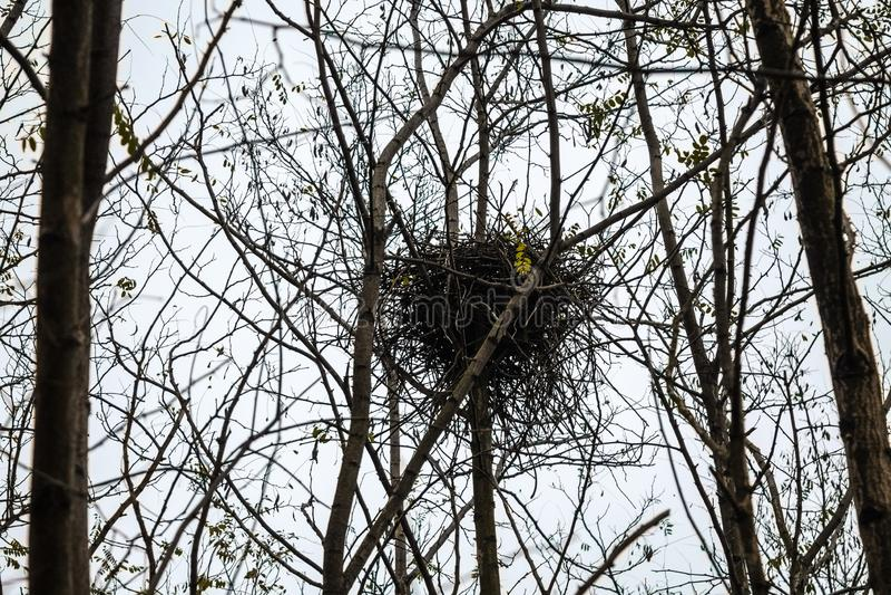 Il nido creato dagli uccelli nella foresta è abbandonato per l'inverno fotografie stock libere da diritti