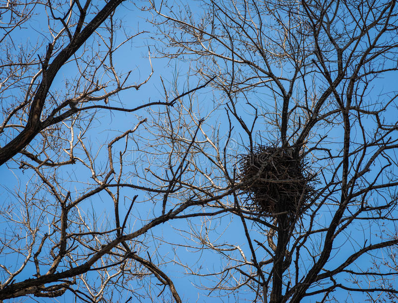 Il nido del corvo. fotografia stock libera da diritti