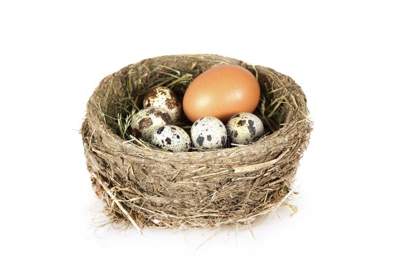 Il nido dell'uccello con le uova sopra bianco immagine stock libera da diritti