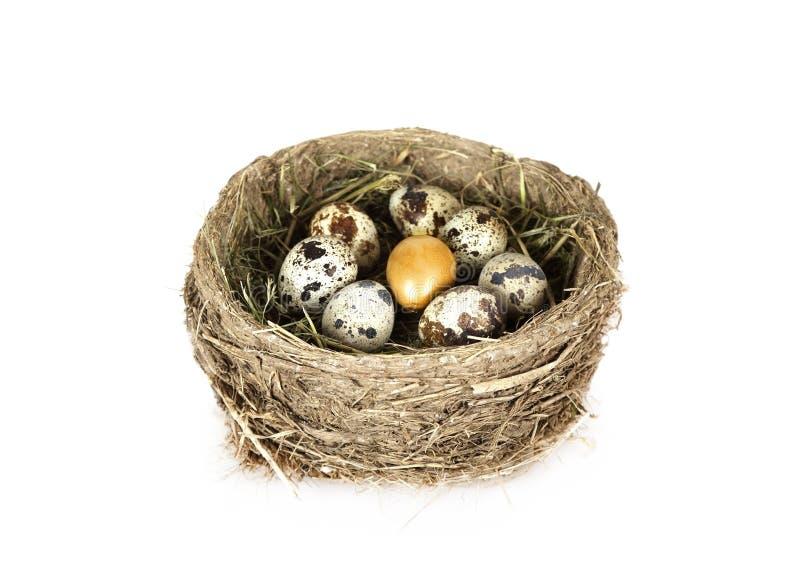Il nido dell'uccello con le uova una di loro è oro fotografie stock libere da diritti