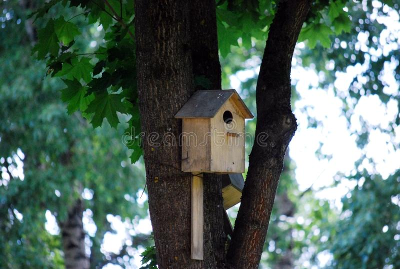Il nido per deporre le uova degli uccelli è battuto su un albero Una casetta per gli uccelli Paesaggio di ESTATE fotografie stock