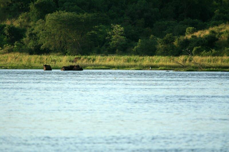 Il Nilo, Murchison Falls NP, Uganda, Africa fotografia stock