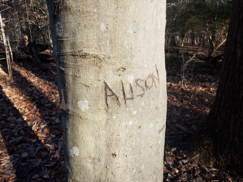 Il nome Alison scolpita nella corteccia di albero nel legno fotografia stock