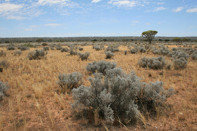 Il Nullarbor arido fotografia stock
