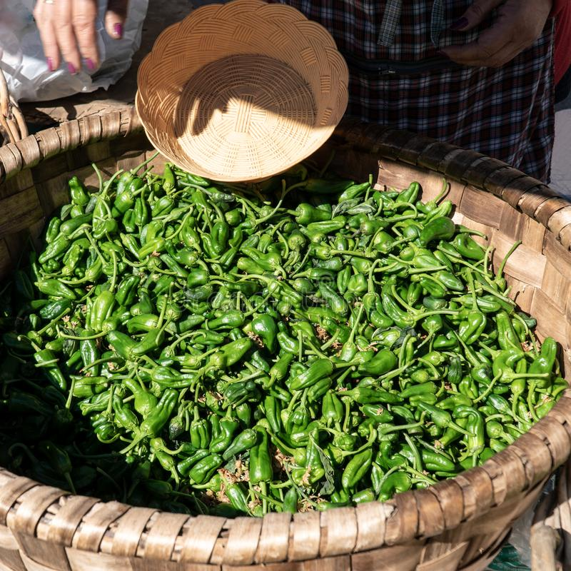 Il padron fresco pepa sul canestro al mercato degli agricoltori fotografia stock