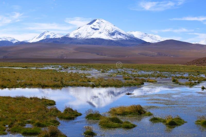 Il paesaggio del Cile del Nord con le montagne delle Ande ed i vulcani, deserto di Atacama, Cile fotografia stock libera da diritti