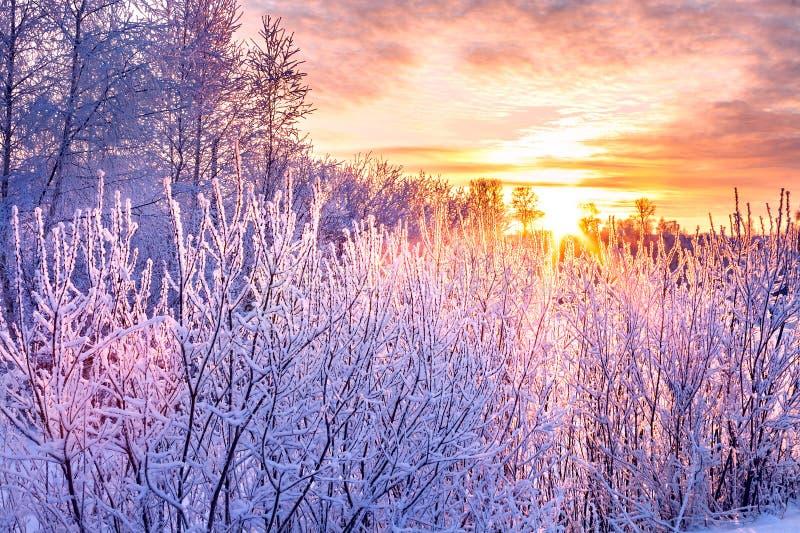 Il paesaggio dell'inverno con il tramonto e l'inverno degli alberi forestali ha coperto i wi fotografie stock libere da diritti