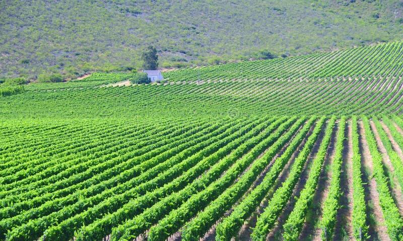 Il paesaggio dell'itinerario 62 con vino sistema - il Sudafrica immagini stock