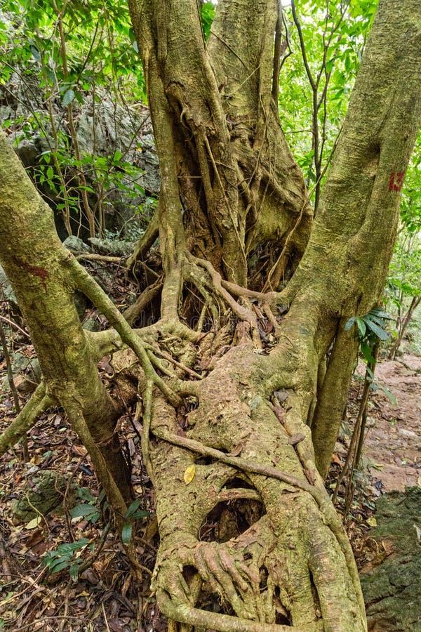 Il paesaggio della foresta pluviale, albero forestale tropicale pianta la foresta verde fotografia stock