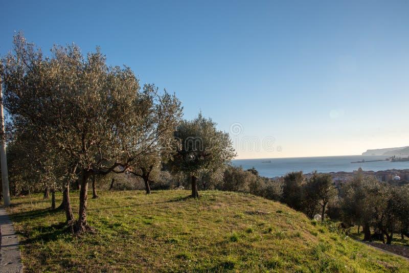 Il paesaggio della Liguria fotografia stock libera da diritti