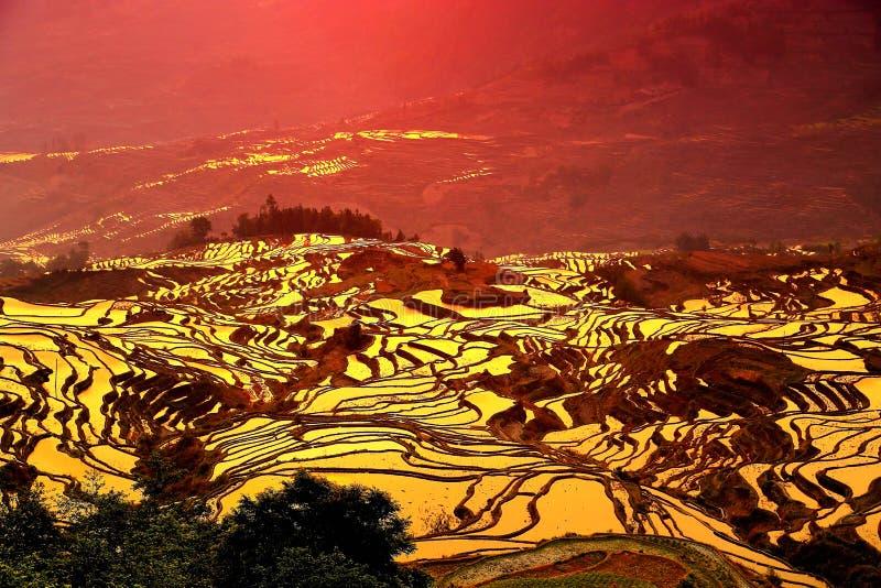 Il paesaggio di alba di Yuenyang Hani Terrace nel Yunnan, Cina fotografie stock libere da diritti