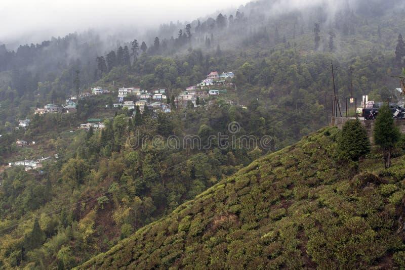 Il paesaggio in intorno a Darjeeling, India è verde e bello È la zona scenica dell'Himalaya in cui proprietà e garde del tè immagini stock libere da diritti