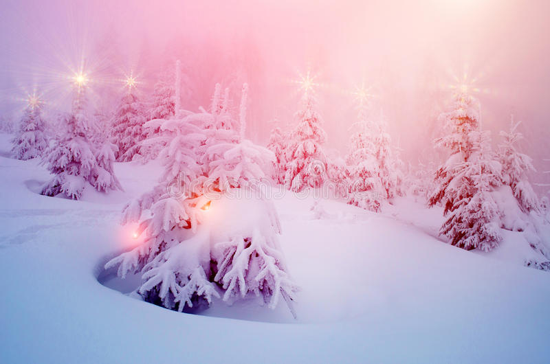 Il paesaggio mistico dell'inverno con gli alberi alle luci di Natale splende fotografia stock libera da diritti