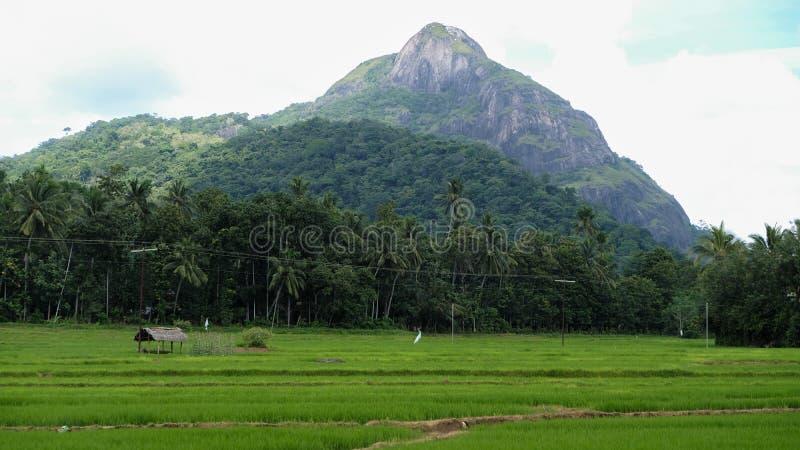 Il paesaggio rurale della zona centrale dello Sri Lanka immagini stock libere da diritti