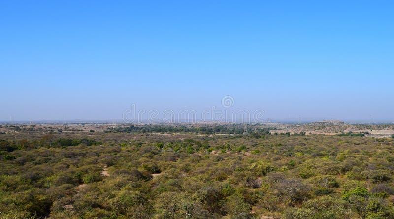 Il paesaggio verde panoramico di una foresta di prosopis juliflora ha catturato da una collina - uno sfondo naturale con cielo bl immagini stock libere da diritti
