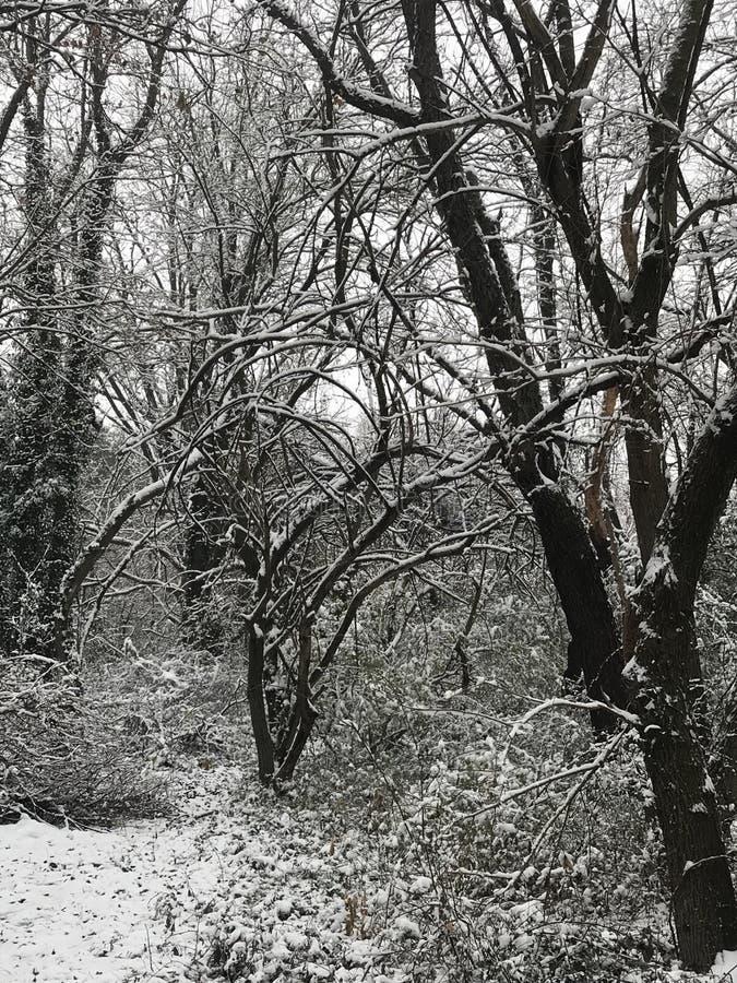 Il paese delle meraviglie di inverno fotografia stock libera da diritti