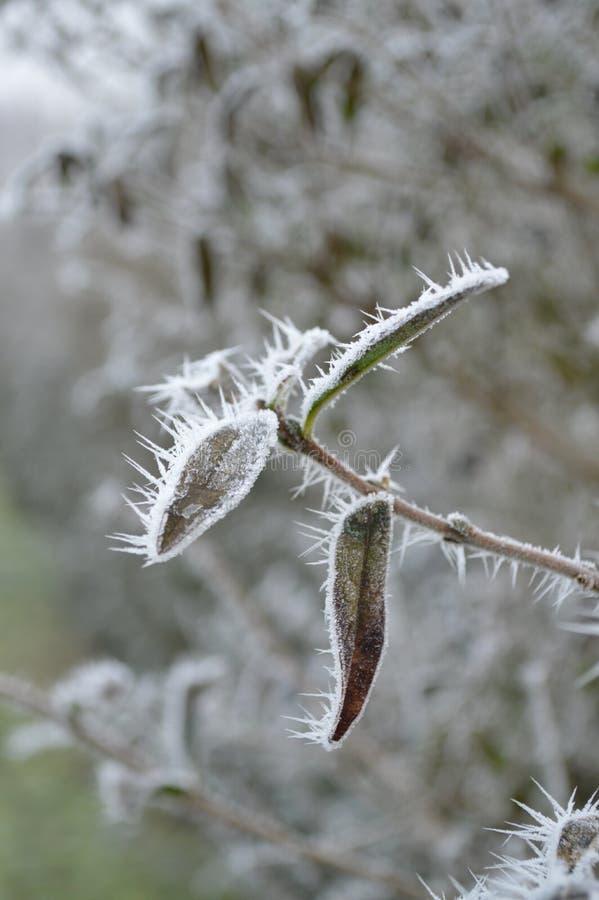 Il paese delle meraviglie di inverno immagini stock