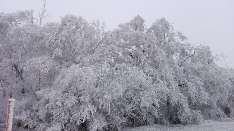 Il paese delle meraviglie 5 di inverno immagine stock libera da diritti