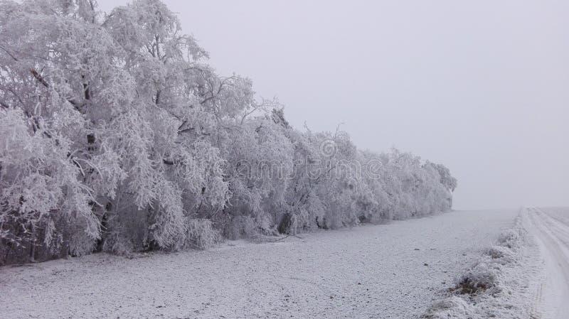 Il paese delle meraviglie 20 di inverno immagini stock