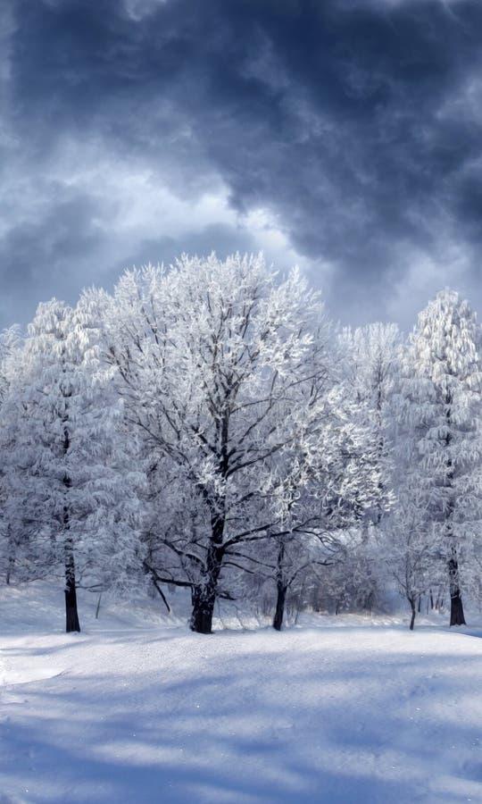 Il paese delle meraviglie di inverno royalty illustrazione gratis