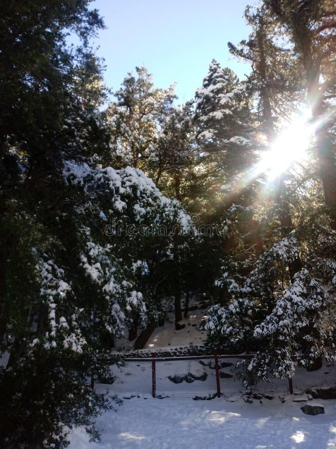 Il paese delle meraviglie di inverno! immagini stock