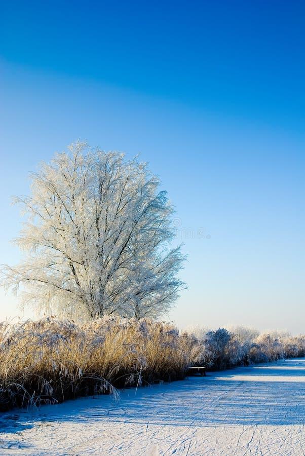 Il paese delle meraviglie di inverno in Olanda fotografie stock libere da diritti