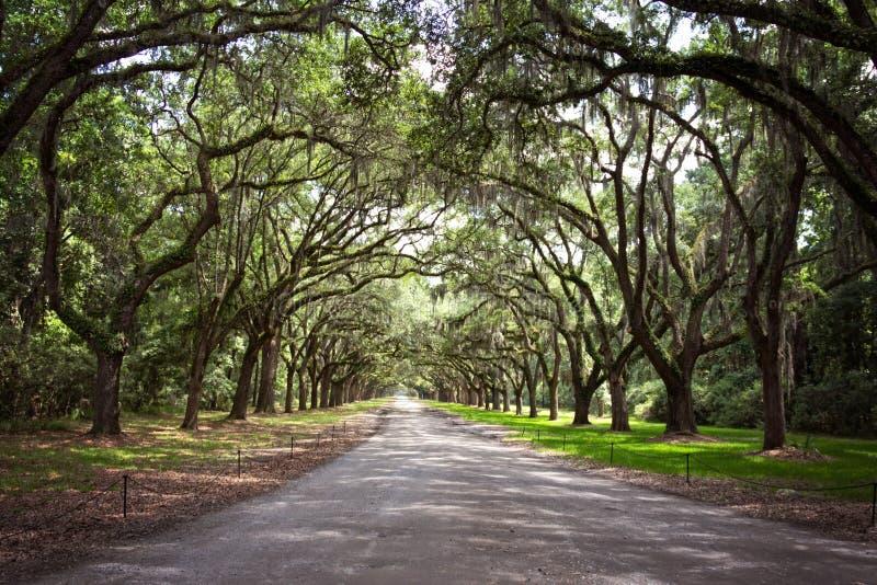 Il paese delle meraviglie di Live Oak fotografia stock libera da diritti