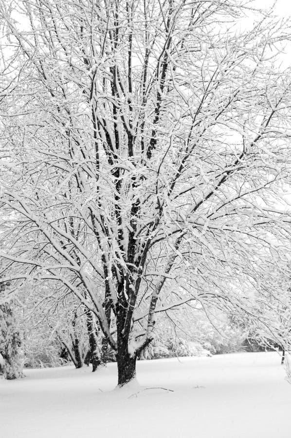 Il paese delle meraviglie II di inverno fotografia stock libera da diritti