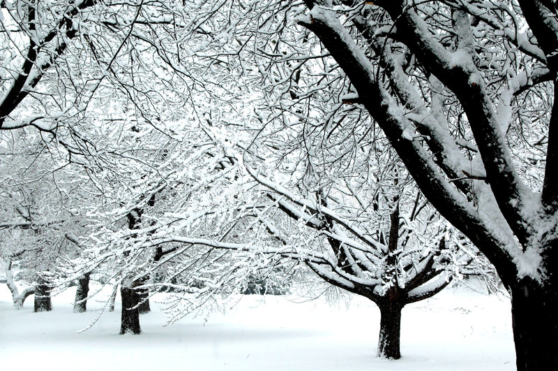 Il paese delle meraviglie IV di inverno fotografia stock