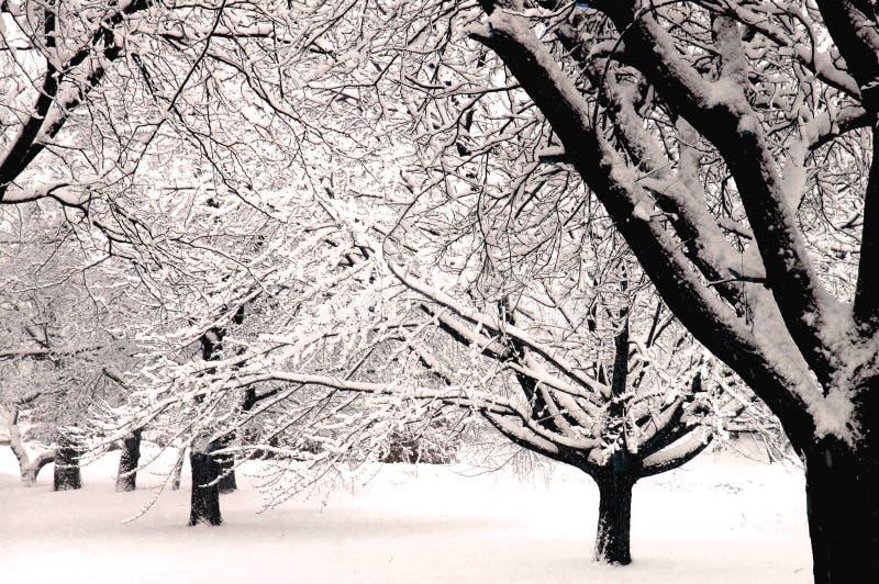 Il paese delle meraviglie V di inverno immagini stock libere da diritti
