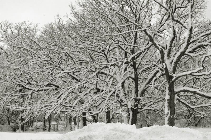 Il paese delle meraviglie VI di inverno immagini stock libere da diritti
