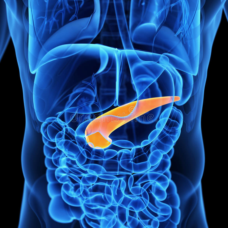 Il pancreas royalty illustrazione gratis