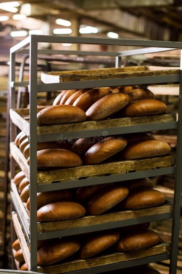 Il panettiere mette di recente il pane al forno sugli scaffali fotografia stock libera da diritti