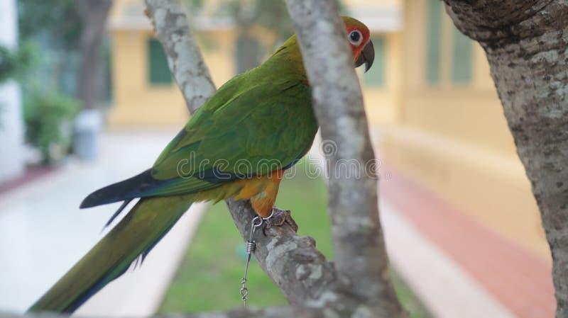 Il pappagallo adorabile e variopinto è sull'albero immagine stock libera da diritti