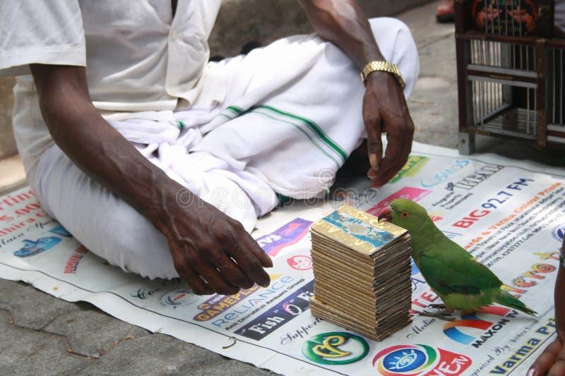 Il pappagallo ha aiutato la lettura della scheda di Tarot fotografia stock libera da diritti