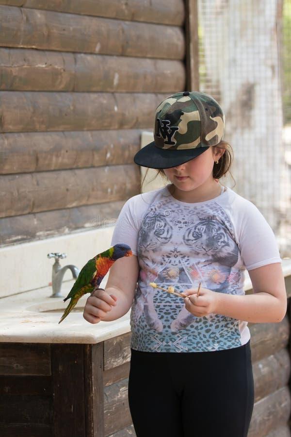 Il pappagallo Lori - Loriinae - si siede sul braccio della ragazza e mangia una mela a Gan Guru Zoo in kibbutz Nir David in Israe fotografie stock libere da diritti