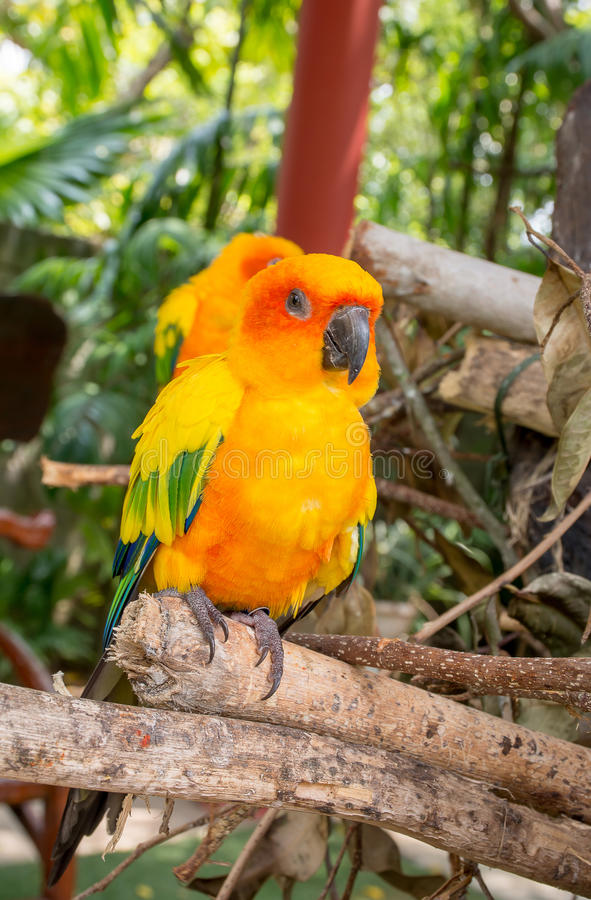 Il pappagallo sta stando sul ramo fotografia stock