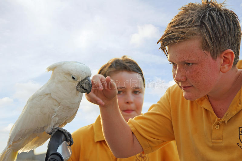 Il pappagallo visita i bambini della scuola fotografie stock