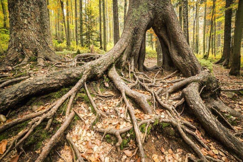 Il parco Colourful di autunno davanti ad un grande albero si pianta immagini stock