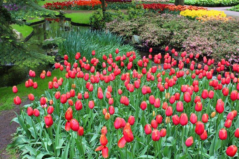 Il parco di Keukenhof è pieno dei fiori variopinti fotografie stock libere da diritti