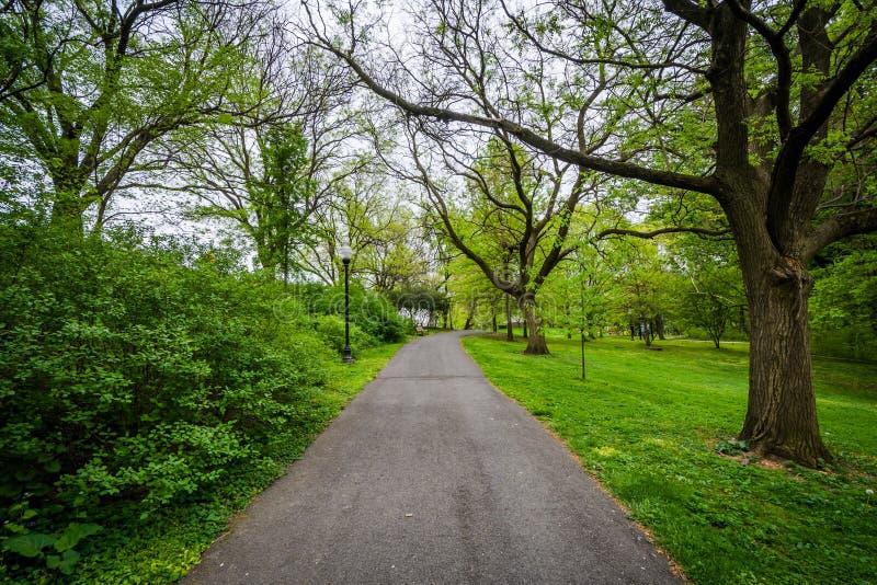 Il passaggio pedonale e gli alberi a Wyman parcheggiano Dell, a Baltimora, Maryland immagine stock