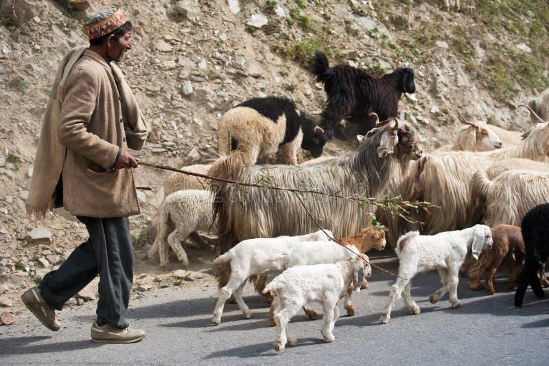 Il pastore Himalayan piombo la sua capra e le pecore si affollano fotografie stock libere da diritti