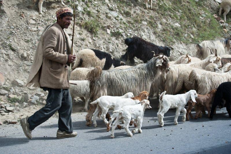 Il pastore himalayano conduce la sua capra e le pecore si affollano fotografie stock libere da diritti