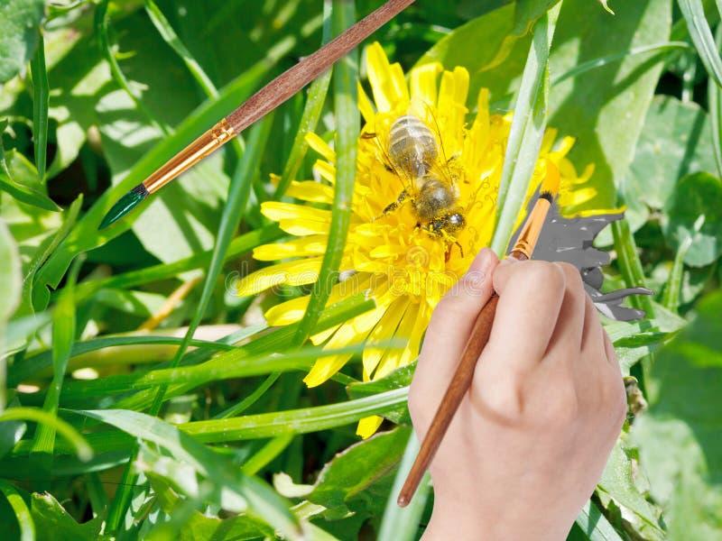 Il pennello dipinge il petalo giallo del fiore del dente di leone fotografia stock