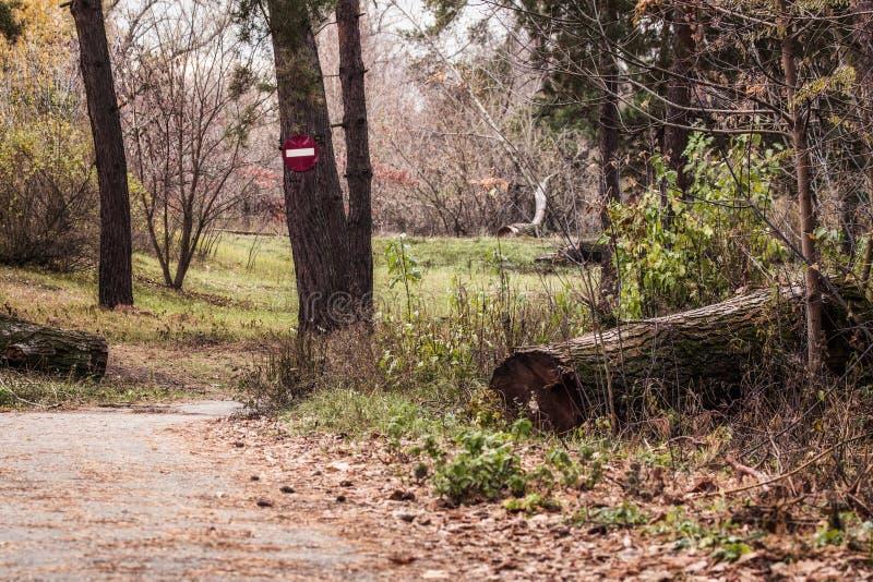 Il percorso conduce lungo gli alberi alti con il segno della fermata immagini stock