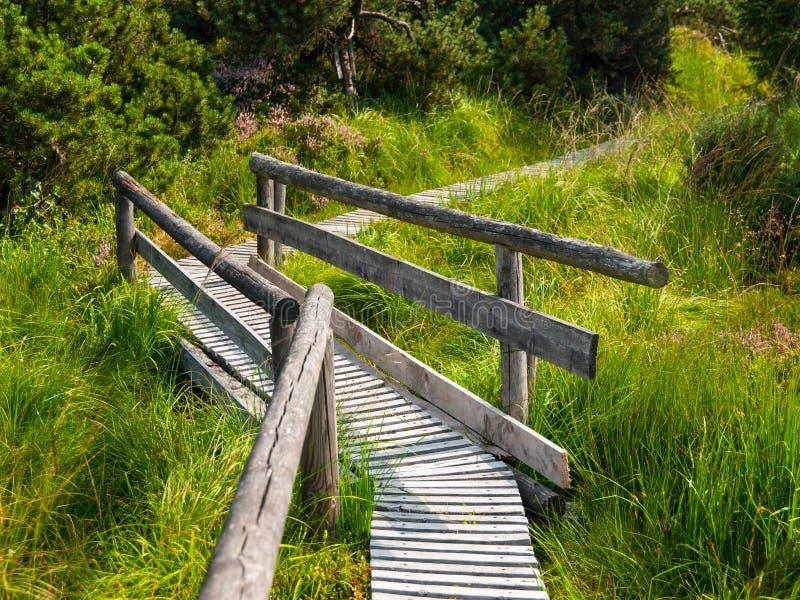 Il percorso di legno dentro attracca l'area immagine stock libera da diritti