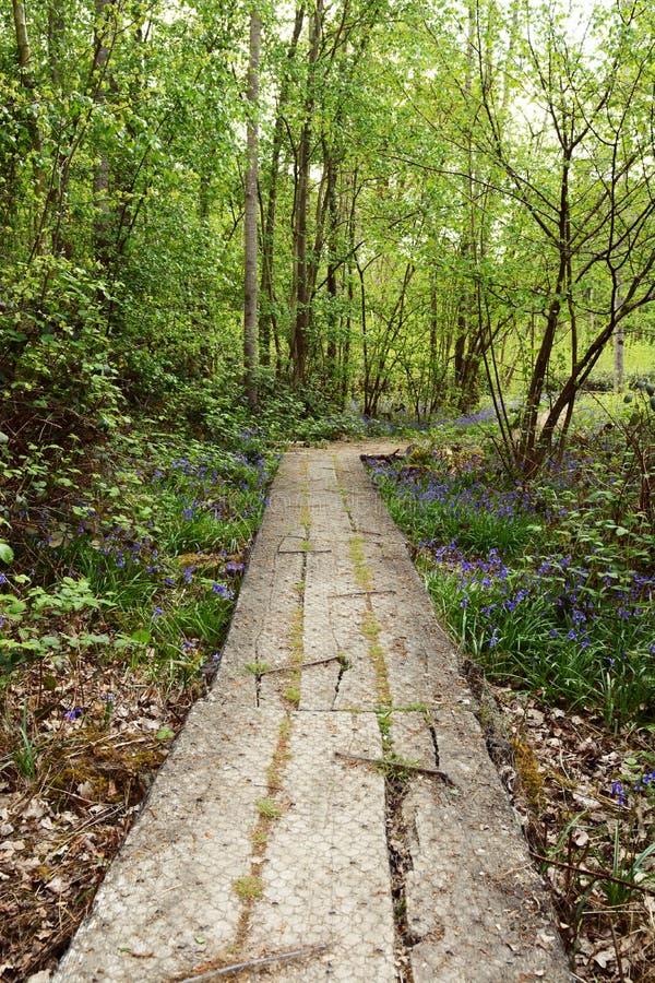 Il percorso di legno lungo della plancia conduce nel terreno boscoso fertile nella primavera fotografia stock