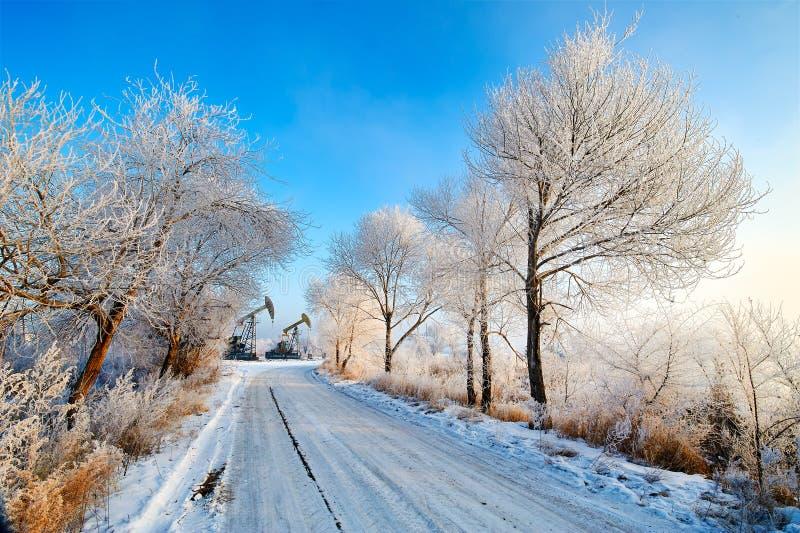 Il percorso e gli alberi con la brina morbida immagine stock libera da diritti